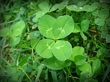 Put Some Luck in Your Pocket