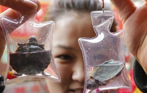 OPINION: Trendy Souvenir Keychains Endanger Animals