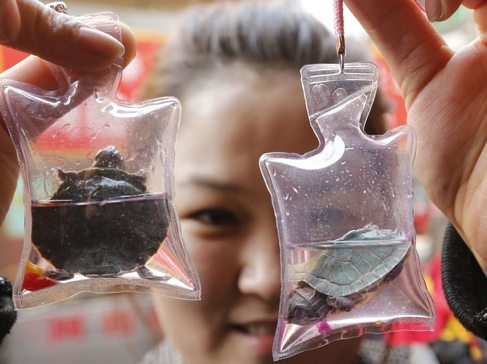 Unknown woman in China holds up turtles encased in a keychain, a trend that has recently become popular with younger people in China.