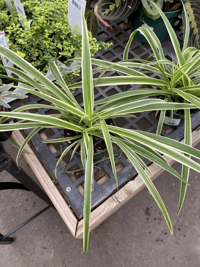 Easy-Care Air Purifying Houseplants